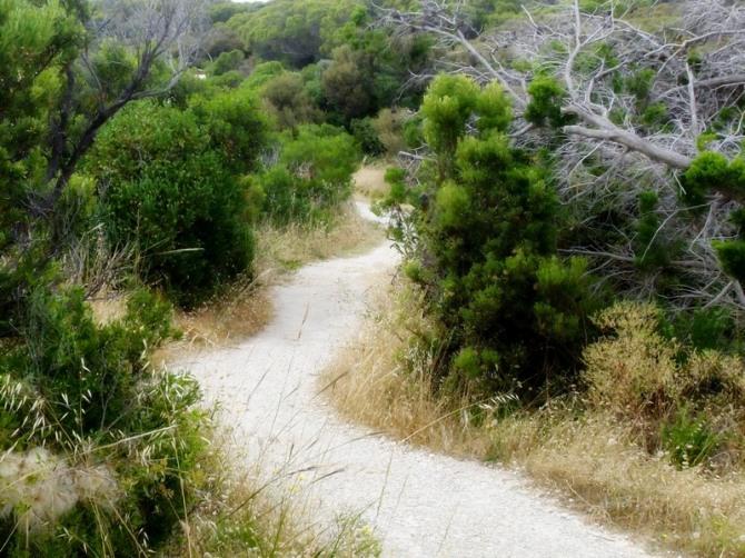 The path winds around