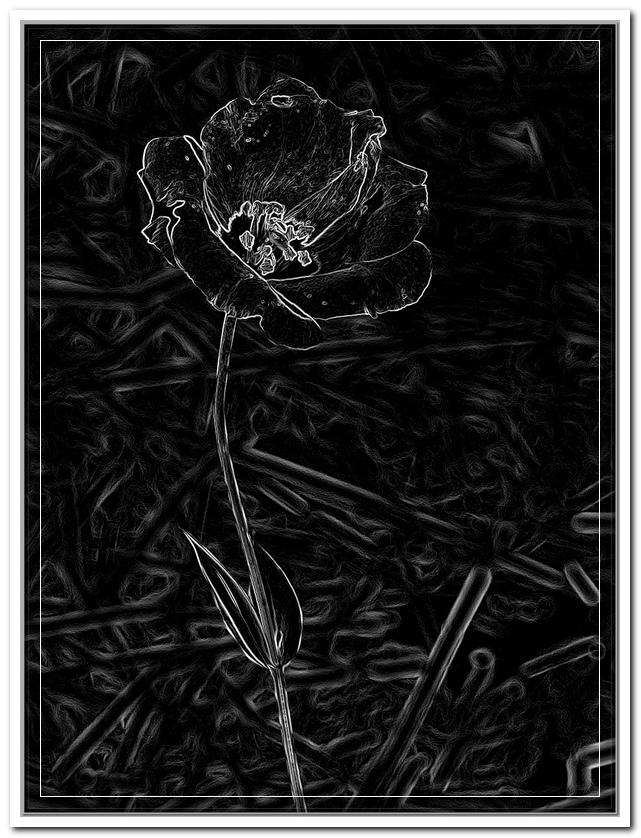Blooming1.jpgf