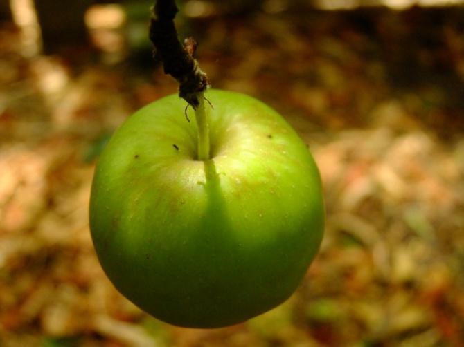 Noble fruit
