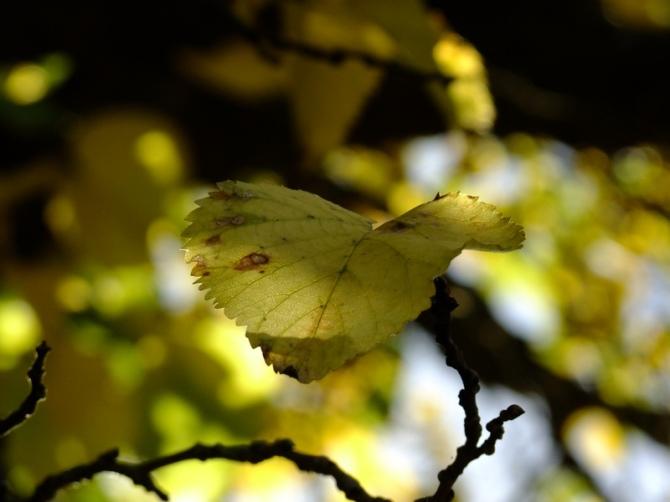 Like a butterfly 2