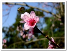 Bee-ing happy