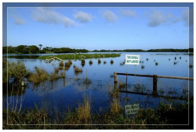 Rivoli Wetlands