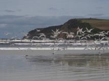 their beach